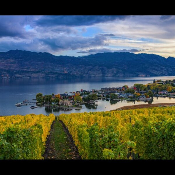 Wijngaard in Canada