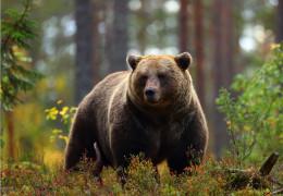Les dix animaux emblématiques du Canada à découvrir pendant votre séjour